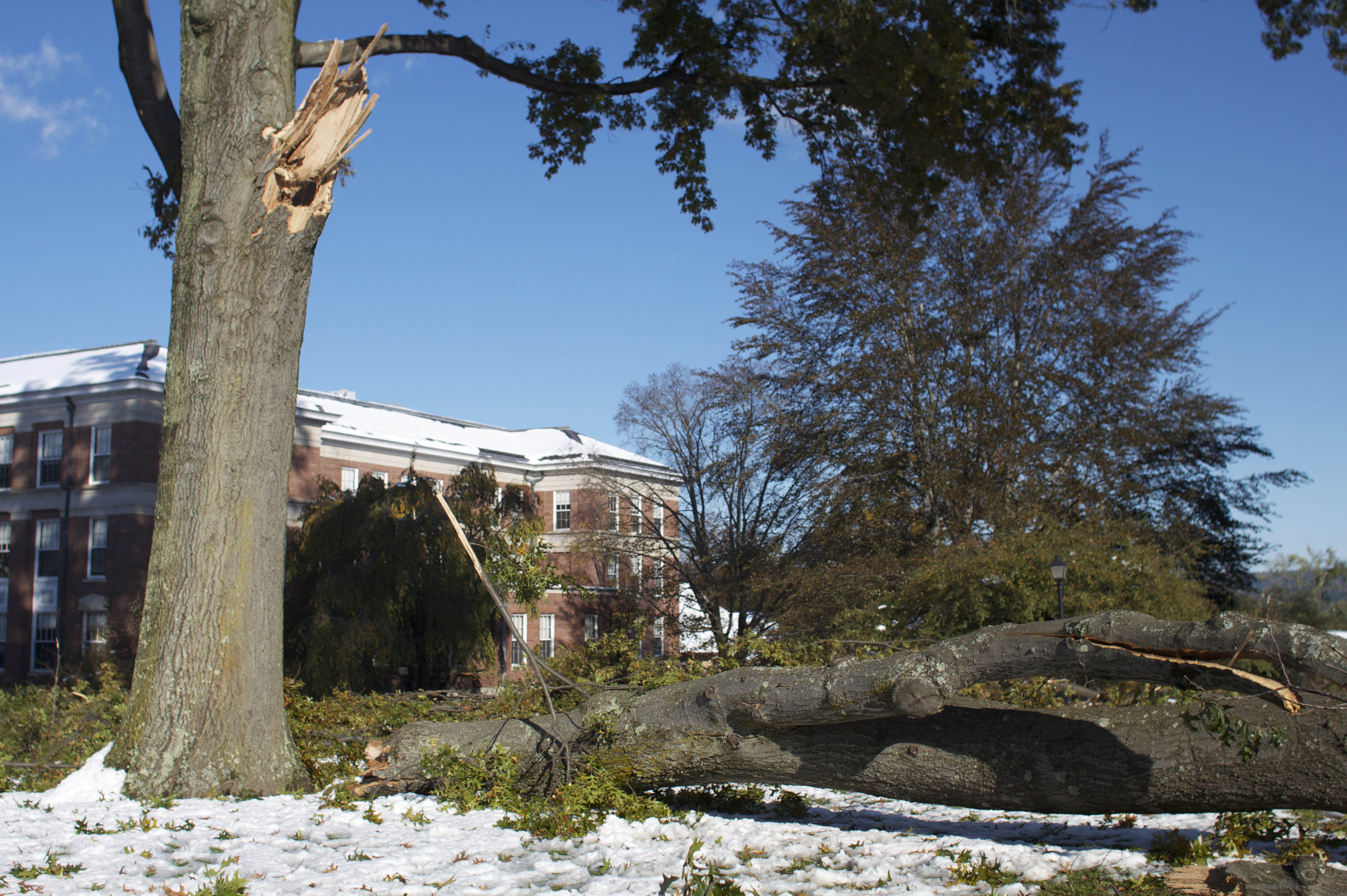 The snowstorm tattered many of the trees on campus, leaving most of the quads in